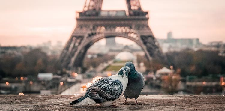 paris-love